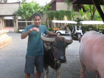 the author with a water buffalo in southeast asia
